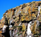 The colourful cliffs of Borgarfjörður eystri in East Iceland are home to many species of bird.