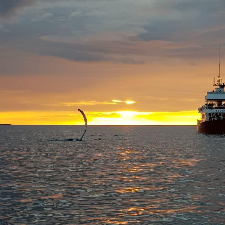 Baleines sous le soleil de minuit   Départ de Reykjavik