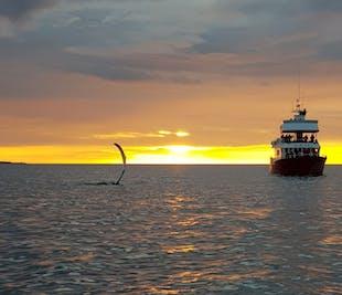 Вечернее китовое сафари   Круиз под полуночным солнцем