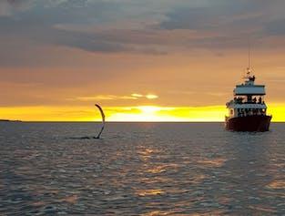 Midnight Sun   Evening Whale Watching
