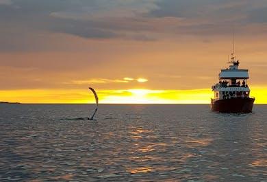 Midnight Sun | Evening Whale Watching