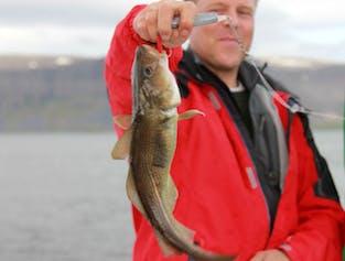 Westfjords Sea Angling | Boat & Fishing Tour