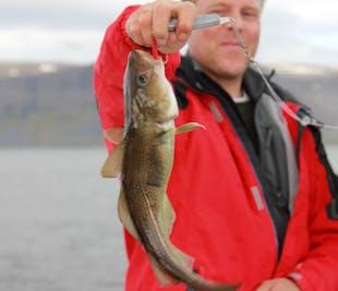 Pêche en mer dans les Fjords de l'Ouest | Départ de Patreksfjordur