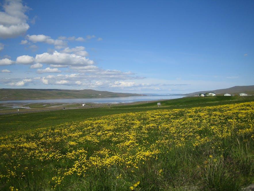 Photo by 'Eysteinn Guðni Guðnason' - Wikimedia Creative Commons