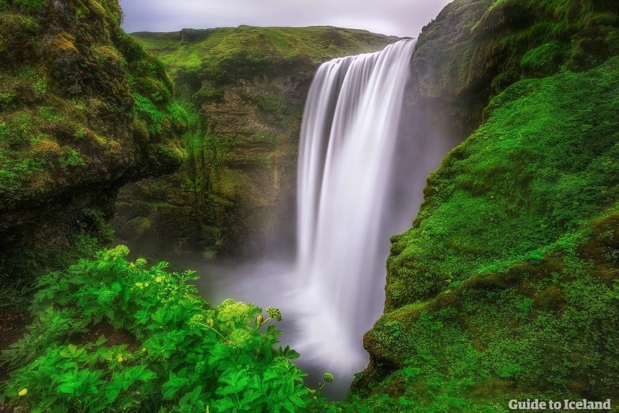Die Klippen rund um den Wasserfall Skógafoss an der Südküste sind grün bewachsen und von unzähligen Vögeln bevölkert.