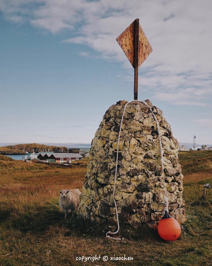 冰岛Flatey小岛上的羊