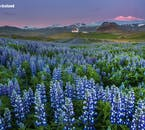The Snæfellsnes Peninsula is often called 'Iceland in Minature' thanks to the wealth of scenery and attractions.