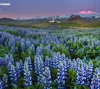 スナイフェルスネス半島はアイスランドのミニチュアとも呼ばれる
