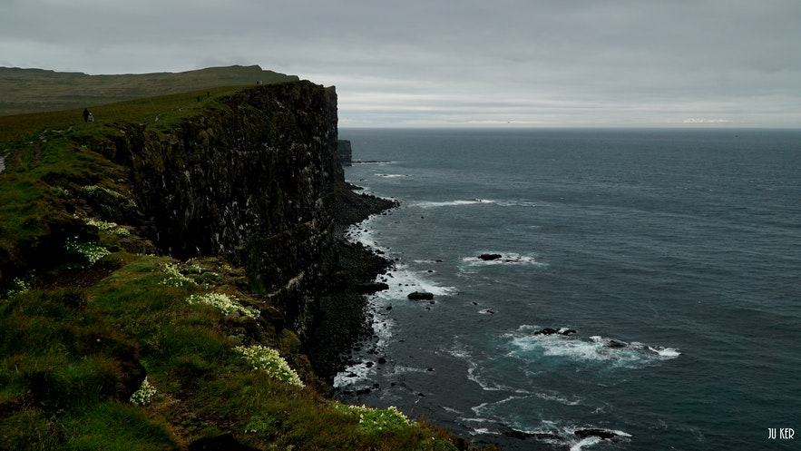 Birdwatching in Látrabjarg : a perfect place in the Westfjords for puffin lovers