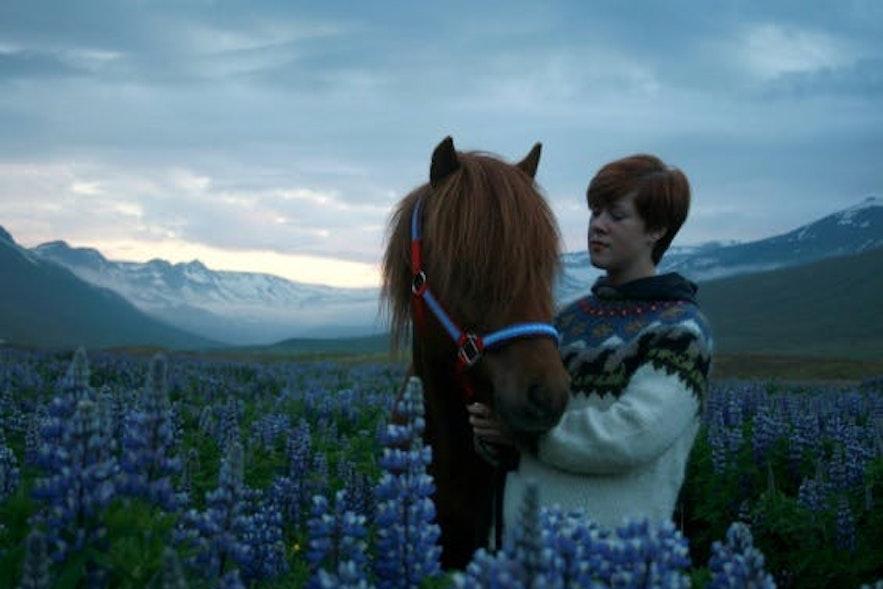 冰島東部冰島馬之旅