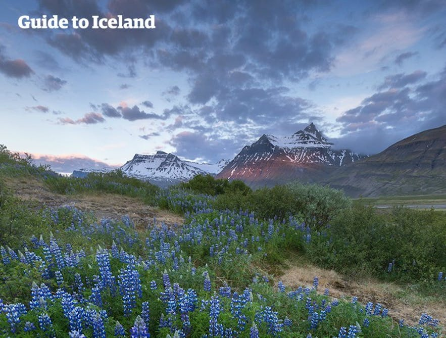 The East Fjords is somewhat neglected by tourists. Those who make the effort are in for a special treat!