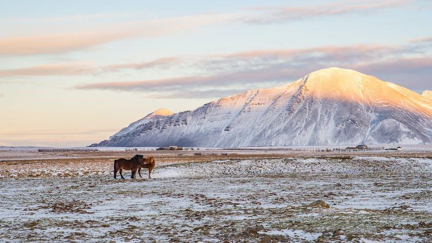 日出與冰島馬