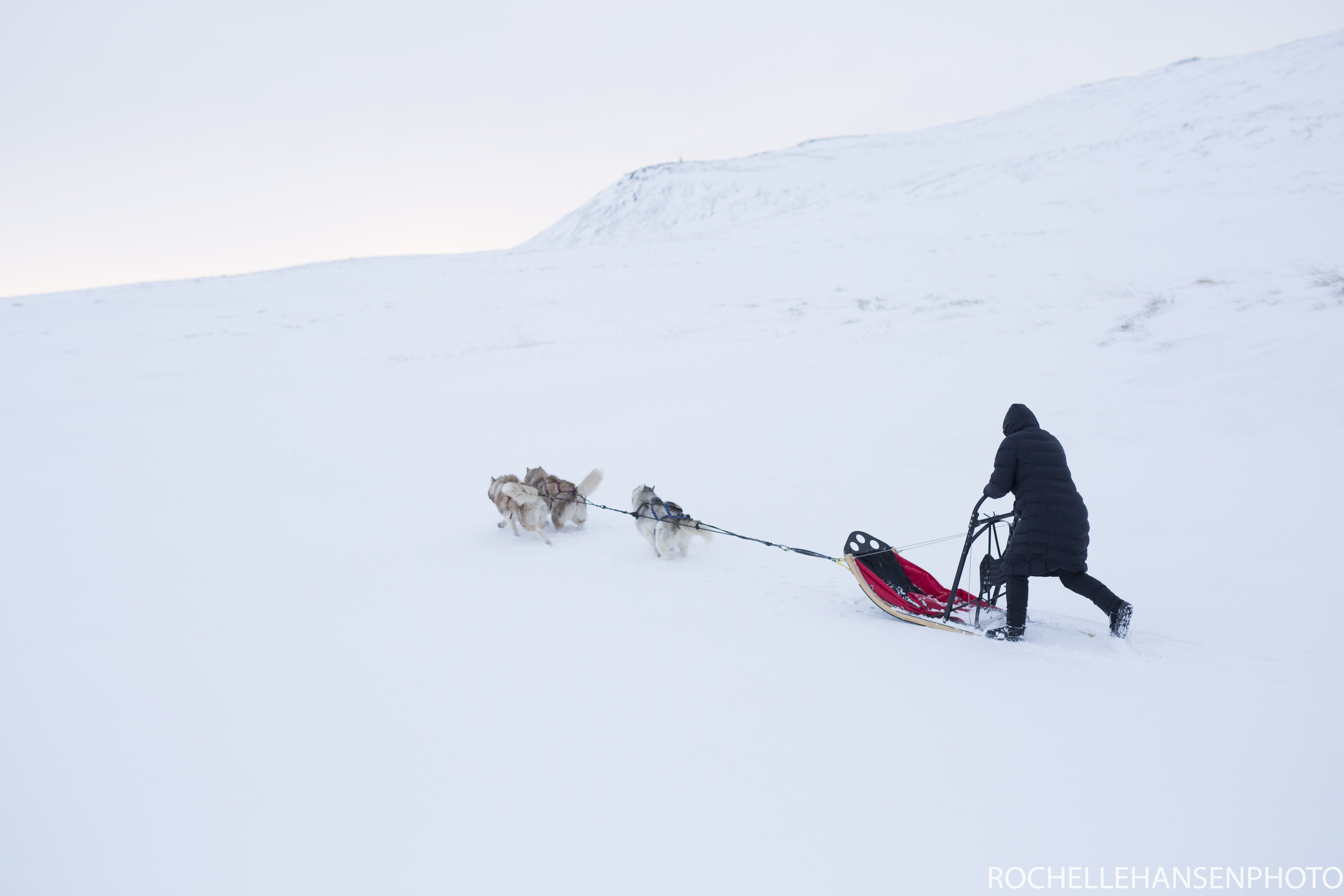 Race across the snow on a dogsledding tour in northern Iceland.
