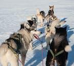 Slitta trainata da cani Livello 1   Pick-up in hotel a Reykjavik