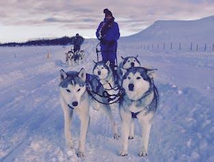 Husky Schlitten-Tour   ab Akureyri