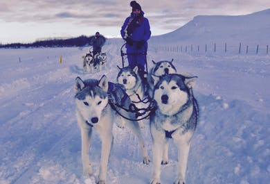 허스키 개 썰매 투어 | 아이슬란드 북부 아큐레이리