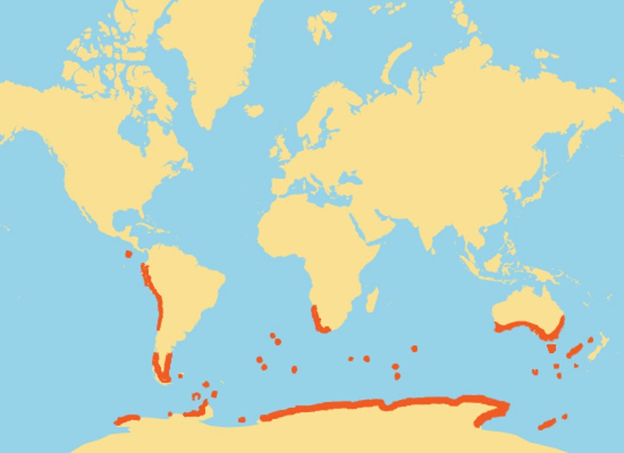 Where penguins usually live in the world.