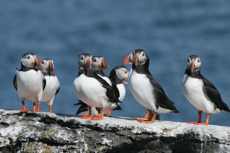 Keep an eye out for puffins as you travel the South Coast, they nest on cliffs near Reynisfjara beach.