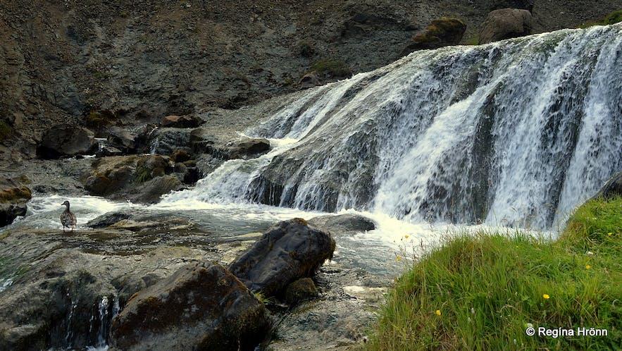 Djúpagilsfoss waterfall in Djúpagil canyon