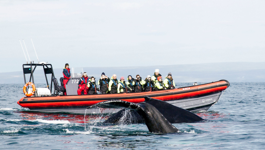 Private 2 Hour Whale Watching RIB Boat Tour with Transfer from Husavik