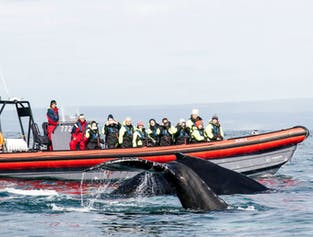 Whale Watching in Húsavík   Private RIB Boat Tour