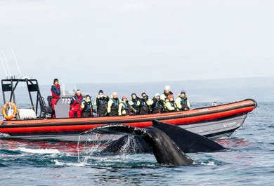 Whale Watching in Húsavík | Private RIB Boat Tour