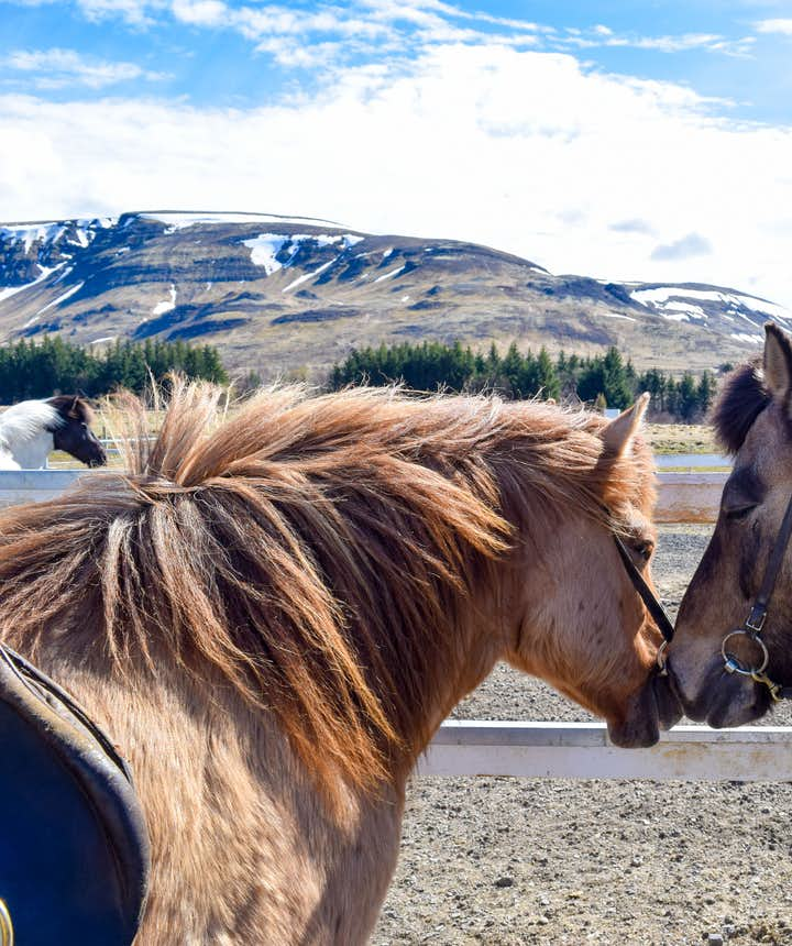 To Rent a Car In Iceland or Go On Day Tours: How To Pick The Right Sightseeing Option