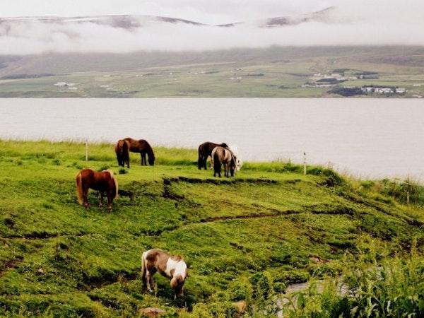 Skjaldarvík Ferðaþjónusta