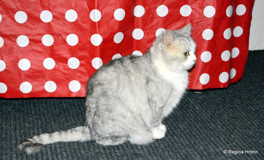 Hippó the Cat at the Museum of Icelandic Witchcraft