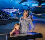 Learn all about the different species of whales at the Whale of Iceland exhibition.