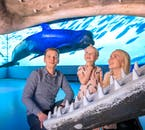 Learn about Iceland's largest residents at the Whales of Iceland exhibition.