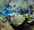 美しい水中の世界が広がるアイスランドの有名なシュノーケリングスポット、シルフラの泉
