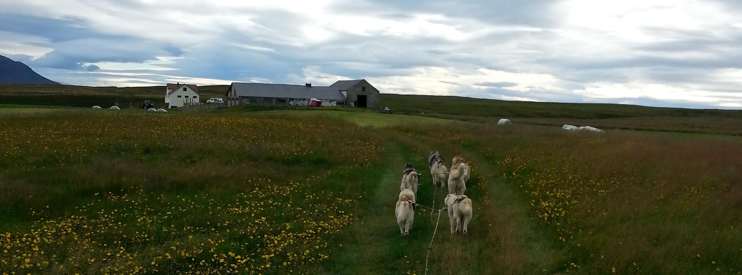Drøn hen over landbrugsjorder nær søen Mývatn på en hundevognstur.