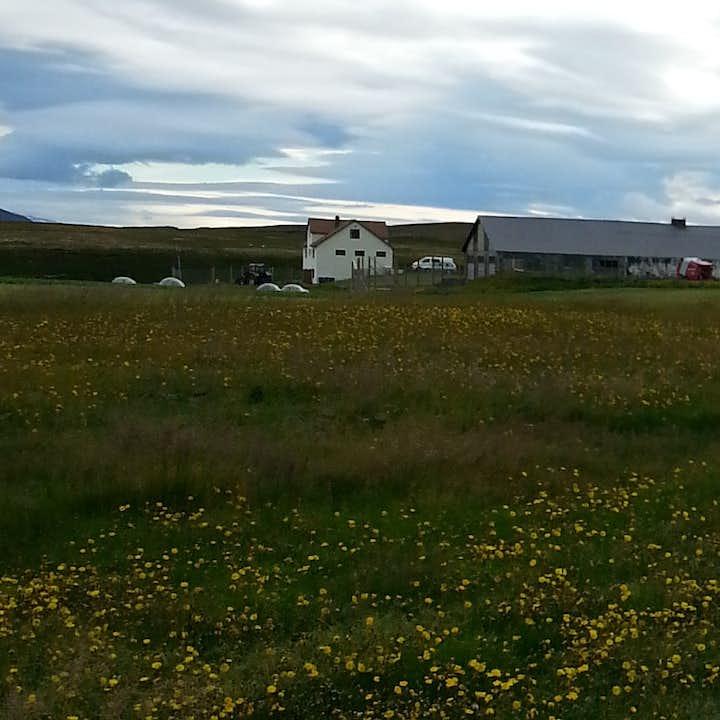 西伯利亚雪橇犬夏季旅行团|冰岛北部米湖出发-自驾集合