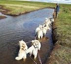 Es gibt viele Möglichkeiten, um fantastische Fotos bei dieser Hundewagen-Tour in Island zu machen.