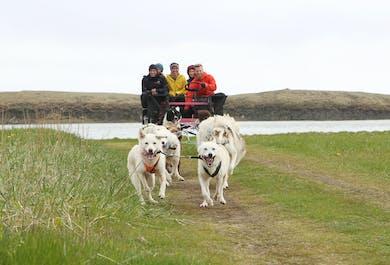 現地集合|犬ぞりツアー(初心者向け)