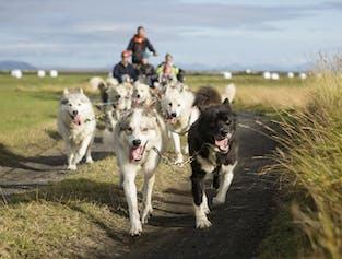 Slitta trainata da cani Livello 1 | Pick-up in hotel a Reykjavik