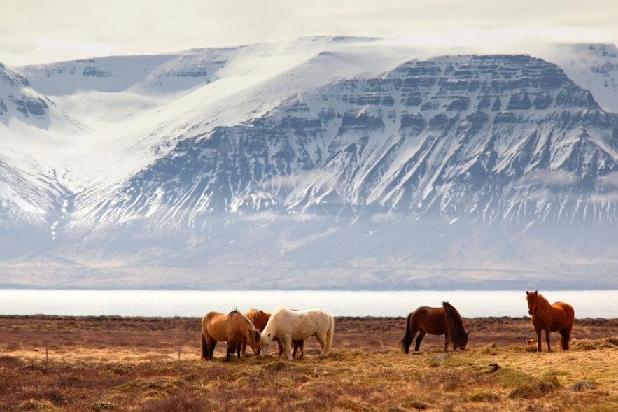 冰島4月春季