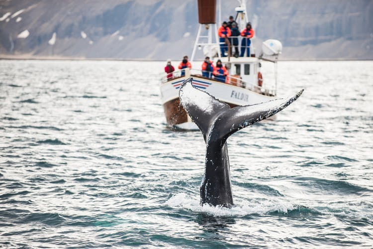 Whale watching is one of Iceland's most popular activities.