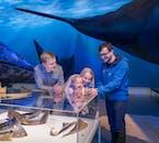 Whales Of Iceland es la actividad perfecta para familias