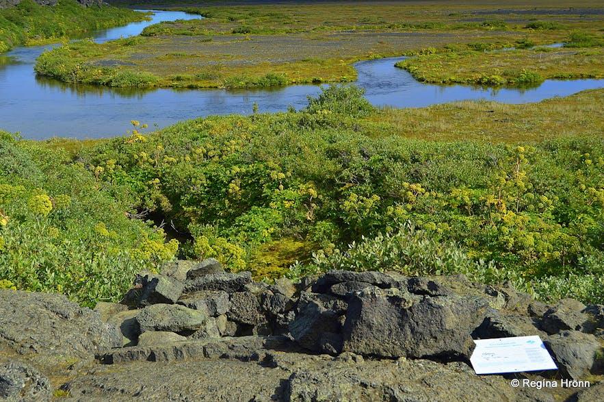 Herðubreiðarlindir oasis