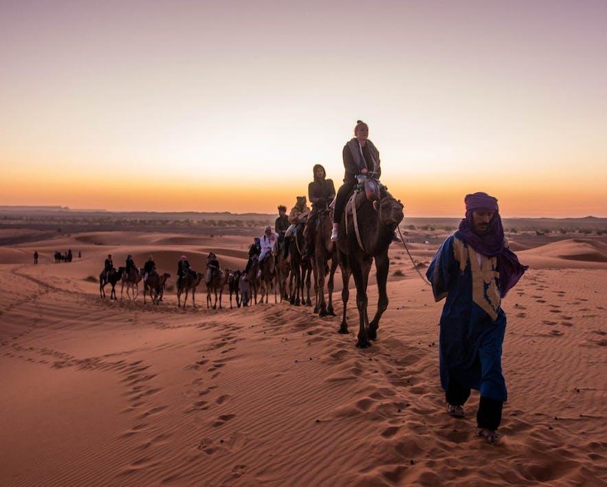 Zespół Guide to Iceland podczas jazdy na wielbłądach po Saharze.