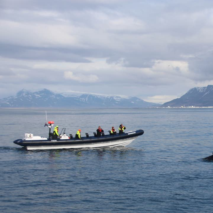 The RIB Boat Express gets you closer to the whales than any other type of vessel.