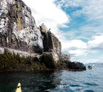 カヤックツアーではブレイザフィヨルズル湾に生態系についても知ることができる