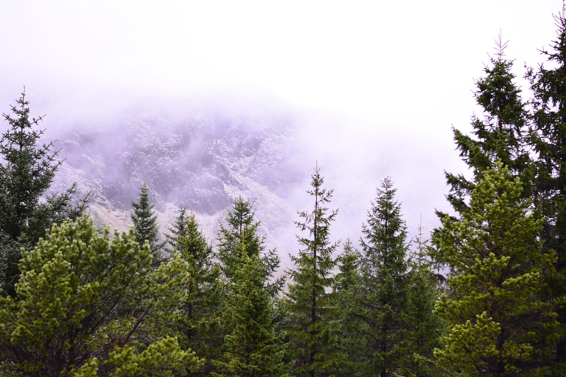 冰岛真的没有树吗?|数数冰岛的森林