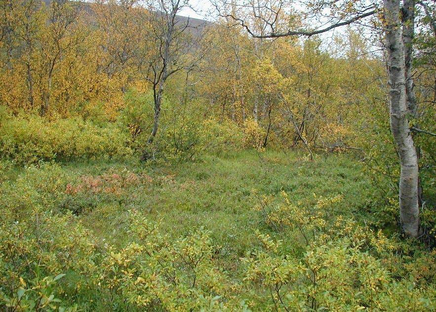 友谊森林就位于著名的黄金圈景区附近