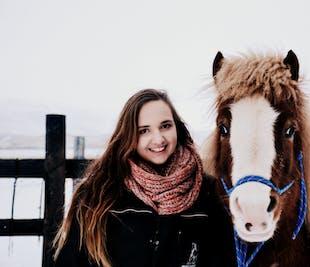 アークレイリ発|アイスランドホースのエサやり+触れ合い体験