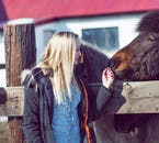 Get a fantastic photo of your loved one with the friendly Icelandic horse on this photography tour.