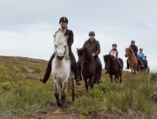 Afternoon adventure | Buggy, Horses & Dinner (Akureyri)