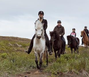 Afternoon adventure | Buggy, Horses & Dinner (Akureyri)